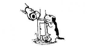 Dog at lamp post web