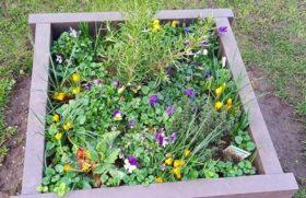 Edible Ruddington planter