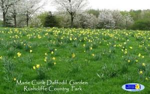 Daffodil Garden, 2010